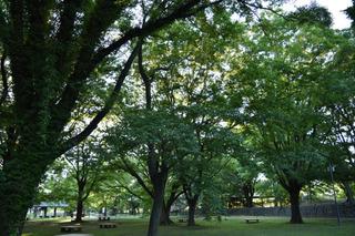 タワーパークの森1