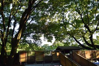 タワーパークの森2
