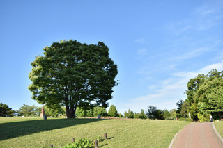 タワーパークの木