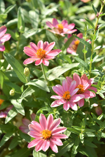 秋の花2.jpg