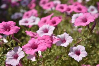 秋の花3.jpg