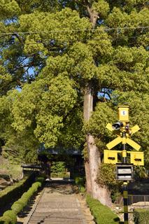 踏切と大木.jpg