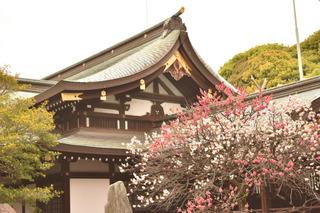 花桃と拝殿1