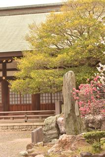 花桃と拝殿2