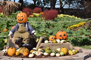 花広場のかぼちゃ