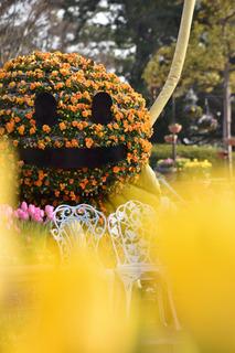 ジャックランタン風の花